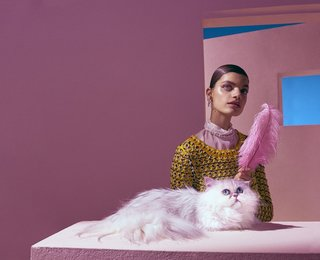 Aristo Cats by Studio Tina Hausmann